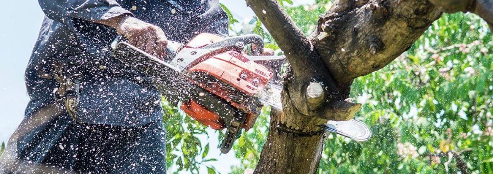 A man using a chainsaw and cutting of a large tree branch while wood chips are flying through the air